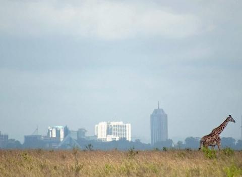 Кенияславится разнообразием заповедной флоры и фауны