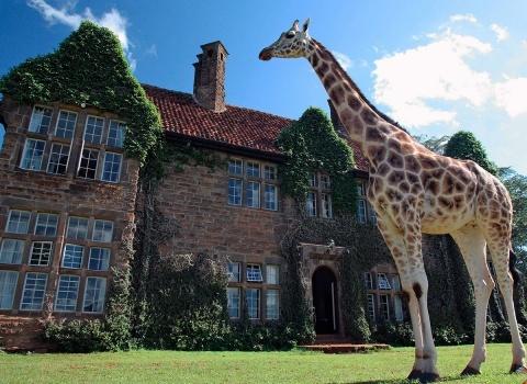ОтельGiraffe Manor, Kenya.Этот отель в Кении называется Жираффе Манор, что переводится как поместье жирафа.