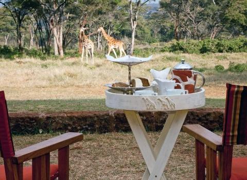 ОтельGiraffe Manor, Kenya. Сидя за столиком на веранде отеля можно общаться с жирафами